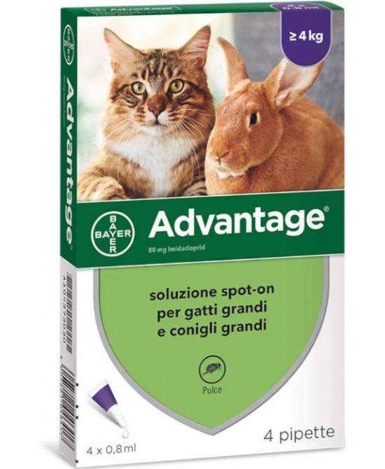ADVANTAGE SPOT ON GATTI e CONIGLI Oltre 4 Kg 4 pipette x 0,8ml - Farmaci.me