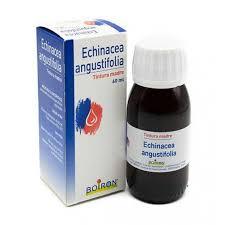 ECHINACEA ANGUSTIFOLIA ESTRATTO IDROALCOLICO 60 ML INT - Farmaciapacini.it