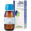 RIBES NIGRANULIUM GEMME MACERATO GLICERICO 60 ML - Farmaciapacini.it