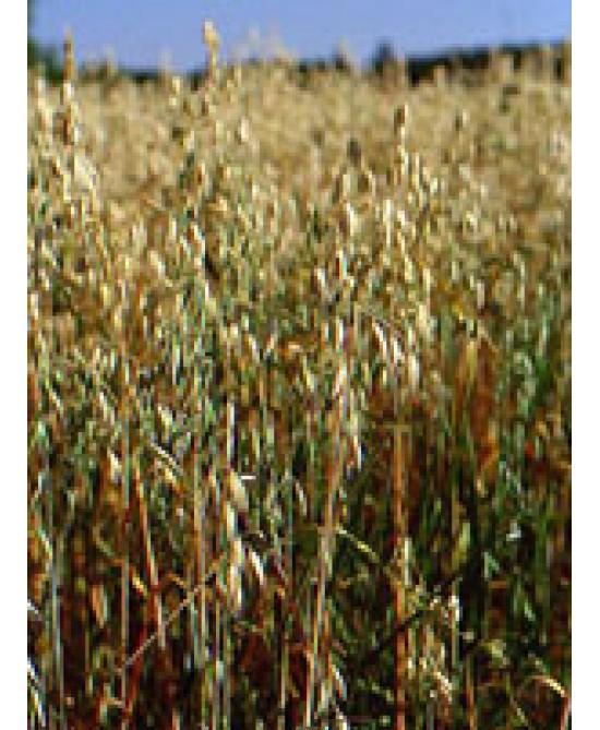 Herboplanet Tsa Avena Sativa Semi Integratore Alimentare 50ml