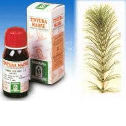 EQUISETO 12 50ML TM - Farmacia Centrale Dr. Monteleone Adriano