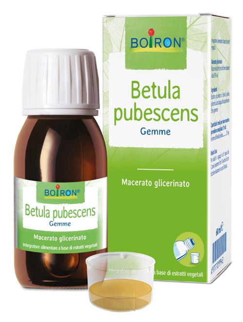 BETULA PUBESCENS MACERATO GLICERICO 60 ML INT - Farmaseller