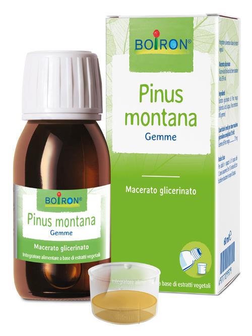 PINUS MONTANA MACERATO GLICERICO 60 ML INT - Farmaseller